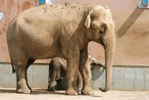 Moscow zoo. elephant by AnJail