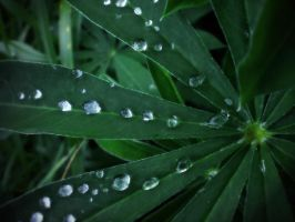 _Drops_Drops_Drops_ by Theressa