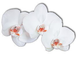 Flower 009 - Clear Cut PNG by Travail-de-lame