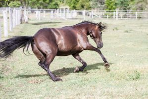 Dn pony canter launch body low by Chunga-Stock