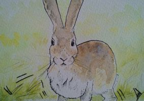 A quick hare by BecciES