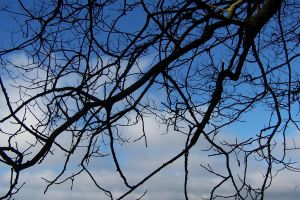 tree branches by 4estfire