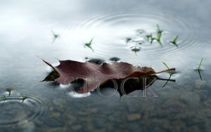 Leaf-Water-1 by Evil-e33
