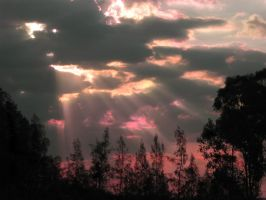 Sunset over the trees by Seralunai