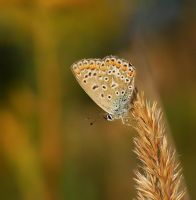 butterfly 3 by decmeister