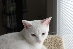 white cat in color by bobbyfufu
