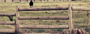 On the Fence by ValeryParker