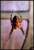 spider in my house by la-niebla