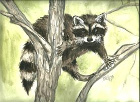 Racoon by YunHarla