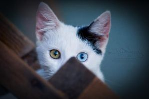 I See You by FreeSpiritFotography