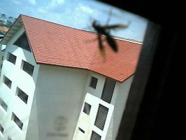 Insect thingy on my window by zerobyte