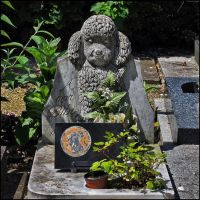 Cemetery of Dogs and Other Domestic Animals - 20 by SUDOR