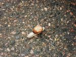 Snail by Gallerica
