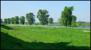 Trees along the River Maas by jchanders