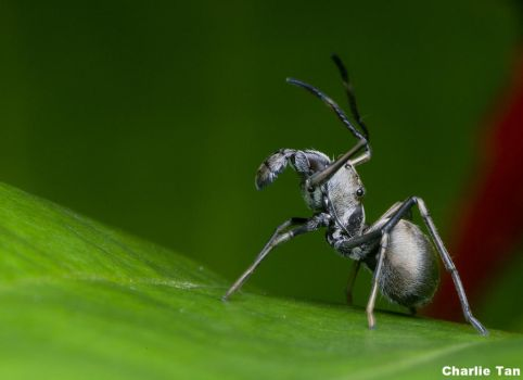 I thought it was an ant... by eselite
