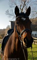 Gracie in Tack II by EquusPhoto