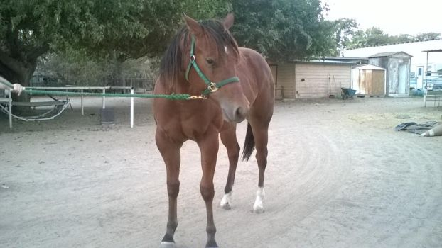 My Actual Filly by Exo-Exo