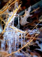 Ice stalks by LBBPhotography