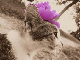 Flower Cat by AwakeYourSoul