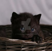 Little black kitten by Tykkebolla