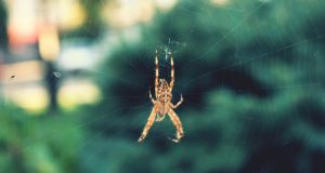 Spider by ginaa