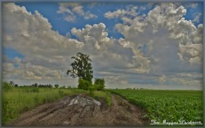 Hungarian landscapes. by magyarilaszlo