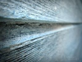 ..line.. by Leptocyon