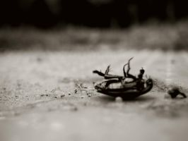 Ant's trail by astutefish