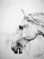 Drawing - Kladruby horse by Ennete