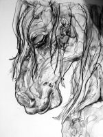 The horse with NO name. by lamelobo