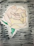 The rose by Gallerica