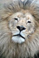 King by fosspathei