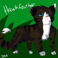 Hawkfeather by chlckadee