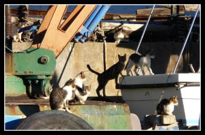 Cats in Harbour II by kanes