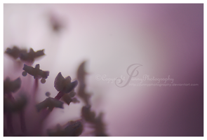 Mysterious Purple by JunnyPhotography