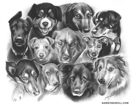 11 Rescue Dogs: 1 Drawing by SamsonLedesma