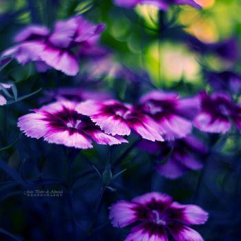 Colors Within by John-Peter
