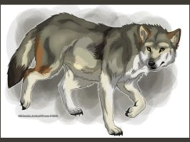 Mexican_Wolf by Karolykan