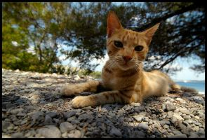 cat 9 by mikeb79