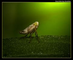 Good Morning Sunshine 09 by boron