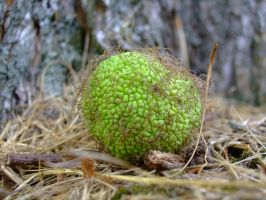 ONE HAIRY GREEN BALL by AudraMBlackburnsArt
