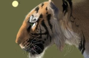 Tiger - tablet drawing - 7th update by Dinofelini