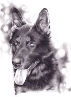 Gera the german shepherd by SimonneX