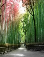 Japan wood of bamboo by Gabriel-Joker