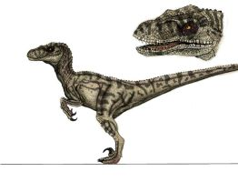 JP3 Female Raptor Color by yankeetrex