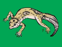 Gecko by Sombraluz-Images