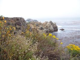 Point Lobos 2 by LavenderGreenTea