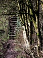 stairs in the forest. by hiddenangelheart