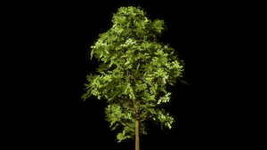 Low Poly Tree by Shroomworks