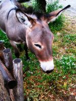 Donkey2 by Rendever